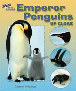 Emperor Penguins Up Close book cover