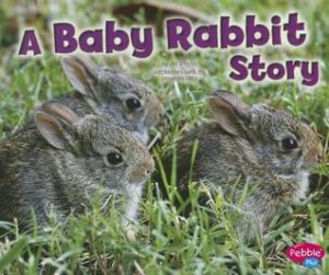 A Baby Rabbit Story book cover