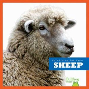 sheep cover image